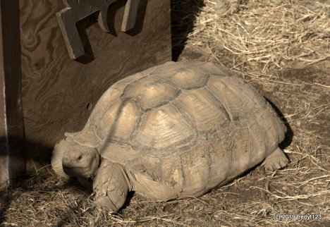 20 year old Tortoise housed in the Garden Complex