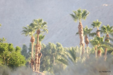 shot with 1000mm telephoto