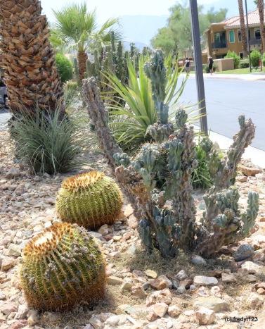popular barrell cactus
